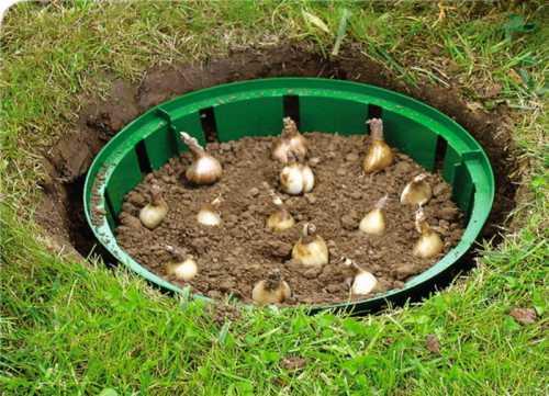 Для начала следует заранее подготовить почву